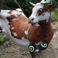 Alejandro Redondo - Cow